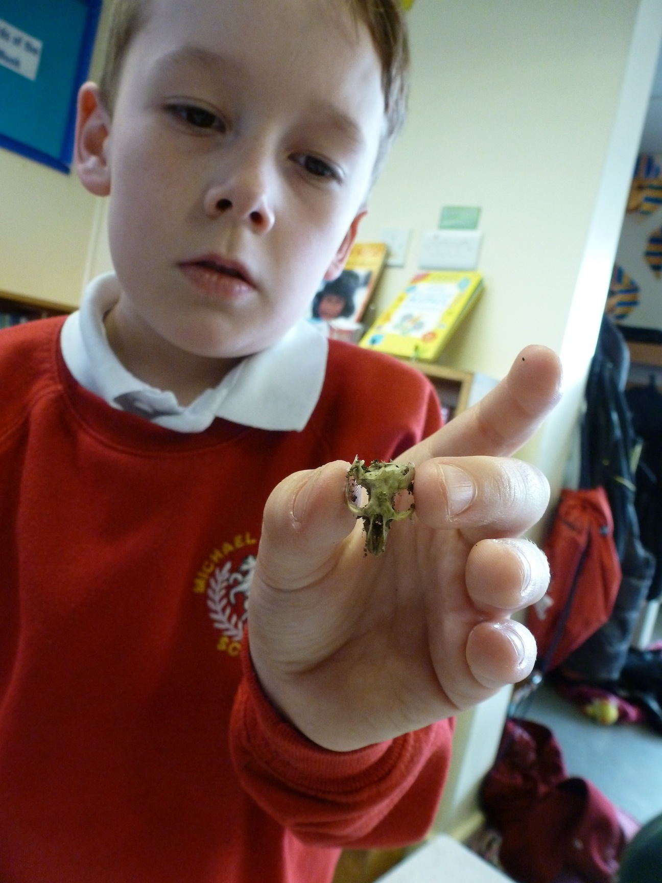 What does a barn owl eat? - Using Wildlife to Learn