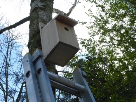 Green Team Nest Boxes38